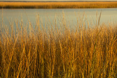 Marsh grasses at sunset in fall at Milford Point, Connecticut. Royalty Free Stock Photo
