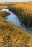 Marsh grasses at sunset in fall at Milford Point, Connecticut. Stock Photos