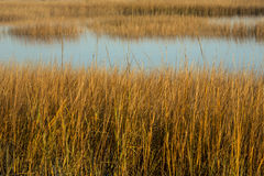 Marsh grasses at sunset in fall at Milford Point, Connecticut. Royalty Free Stock Images