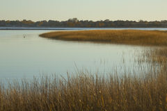 Marsh grasses at sunset in fall at Milford Point, Connecticut. Royalty Free Stock Photos