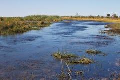 Marsh habitat, at the Bwabwata National Park, Namibia Royalty Free Stock Image