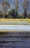 Marsh and herron. Marsh with Great blue Herron in background Stock Photo