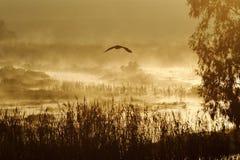 Marsh hunt Stock Photography