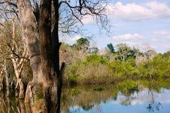 Marsh i Cambodja Royaltyfria Bilder