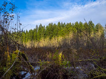 Marsh Lake Blue Sky arkivfoton