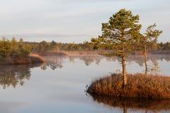 Marsh lake Stock Images