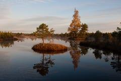 Marsh lake Royalty Free Stock Photos