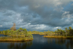 Marsh lake Stock Photography