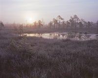Marsh lake Royalty Free Stock Photography