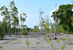 Marsh Land och unga mangroveträd - elefantstrand, Havelock ö, Andaman Nicobar öar, Indien royaltyfria bilder