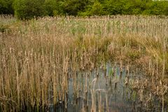 Marsh Land Rushmere-park Royalty-vrije Stock Afbeelding