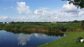 Marsh land. Small swamp outside of Ft.Lauderdale stock photos