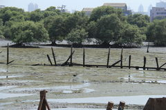 Marsh Land. Swamp of soft wet mud created by water receding during low tide at coast of Mumbai, India Stock Photography
