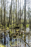 Marsh land in the Usedom Island Nature Park Stock Photography