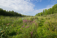 Marsh land vista. A wide angle view of wetland landscape Upper Canada Migratory Bird Sanctuary Ontario Canada Stock Images