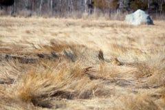 Marsh lands Stock Image