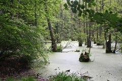 Marsh Landscape ö av Ruegen Fotografering för Bildbyråer