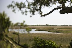 Marsh landscape Stock Image