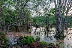 Marsh Landscape bij Schemer Stock Afbeeldingen
