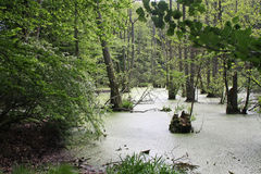Marsh Landscape, Eiland van Ruegen Stock Afbeelding
