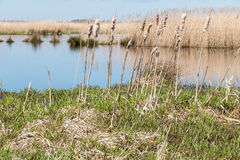 Marsh Landscape. Stock Image