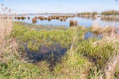 Marsh Landscape. Stock Photography