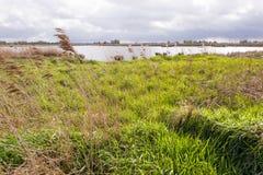 Marsh Landscape in nature wetland Green Jonker. Marsh Landscape in nature wetland Green Jonker at Nieuwkoopse plassen in the Netherlands Stock Image