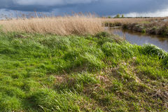 Marsh Landscape in nature wetland Green Jonker. Marsh Landscape in nature wetland Green Jonker at Nieuwkoopse plassen in the Netherlands Stock Photos