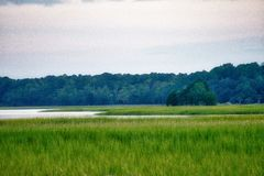 Marsh Landscape in Onderstel Prettig Zuid-Carolina stock foto
