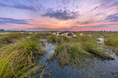 Marsh landscape with pastel colors Royalty Free Stock Photo
