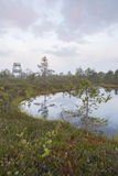 Marsh landscape with pond and watching tower Stock Photos