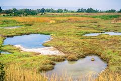 Free Marsh Landscape, Shoreline Park, Mountain View, California Royalty Free Stock Photography - 135815997