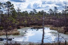 At the forefront there is the water of the bog. Marsh landscape in the spring, a cloudy day; At the forefront there is the water of the bog, in which the blue stock photography