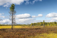 Marsh landscape on the Yamal Peninsula in Siberia Royalty Free Stock Image