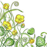 Marsh marigold cowslip, king-cup wild herbs vector floral blossom beautiful nature spring forest flower pattern background with bl Stock Images
