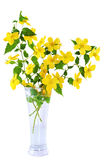 Marsh Marigold  Yellow wildflowers in vase isolated on white bac Royalty Free Stock Photography