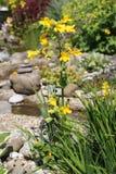 Marsh marigolds Royalty Free Stock Photography