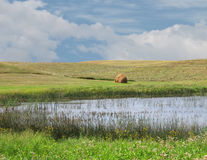 Marsh in the mid-west prairies Stock Photo