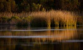 Marsh Morning Light Reflection Royalty-vrije Stock Foto
