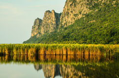 Marsh with mountain reflecting in water Stock Image
