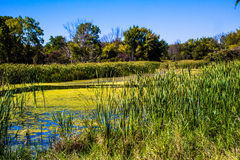 Marsh. This is a nice fall day in the marsh Royalty Free Stock Photos
