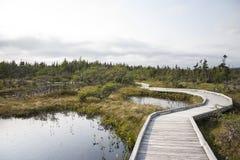 Marsh. Nova Scotia marsh with boardwalk Royalty Free Stock Images