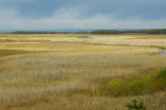 Marsh or Open Wetland Stock Photos