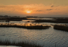 Marsh på soluppgången Arkivbilder