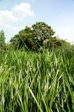 Marsh park Royalty Free Stock Photo