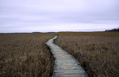 Marsh Path Royalty Free Stock Photography