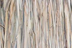 Marsh Plants Huts Fotografía de archivo