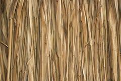 Marsh Plants Huts Imagen de archivo