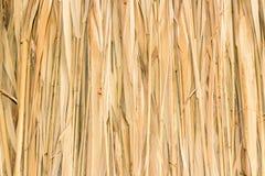 Marsh Plants Huts Stock Photography