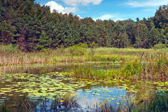 Marsh in Poland Royalty Free Stock Images